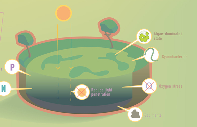Nutrient pollution / Infographic