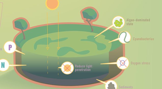 Nutrient pollution / Infografía